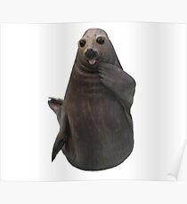 Funny Seal Poster