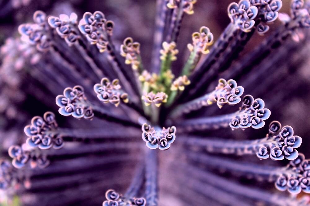 Purple Euphorbia in Detail  by Travelwithmyart