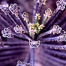 Purple Euphorbia in Detail  by Travelwithmyart
