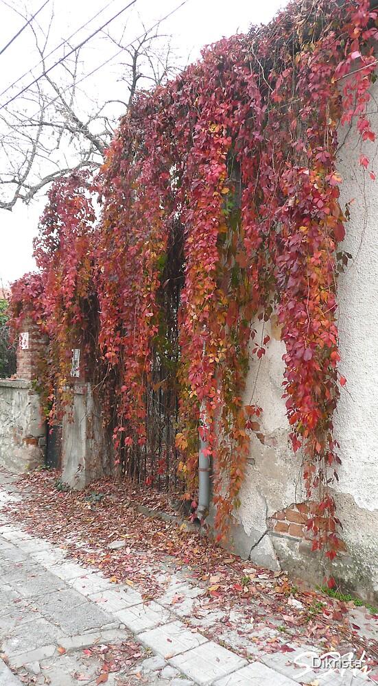 An autumn by Dikrista