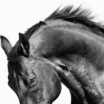Bel Esprit - The Stallion  by FastTrackPhotog