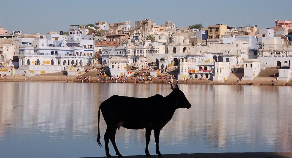 Pushkar, Rajasthan by Peter Gostelow