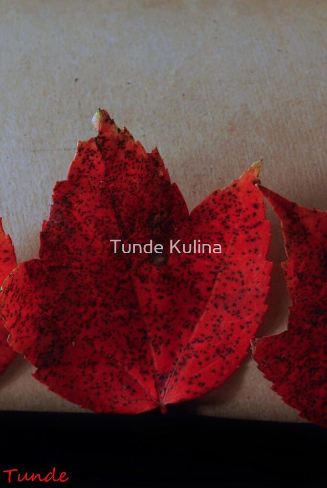 Visszatekintes by Tunde Kulina