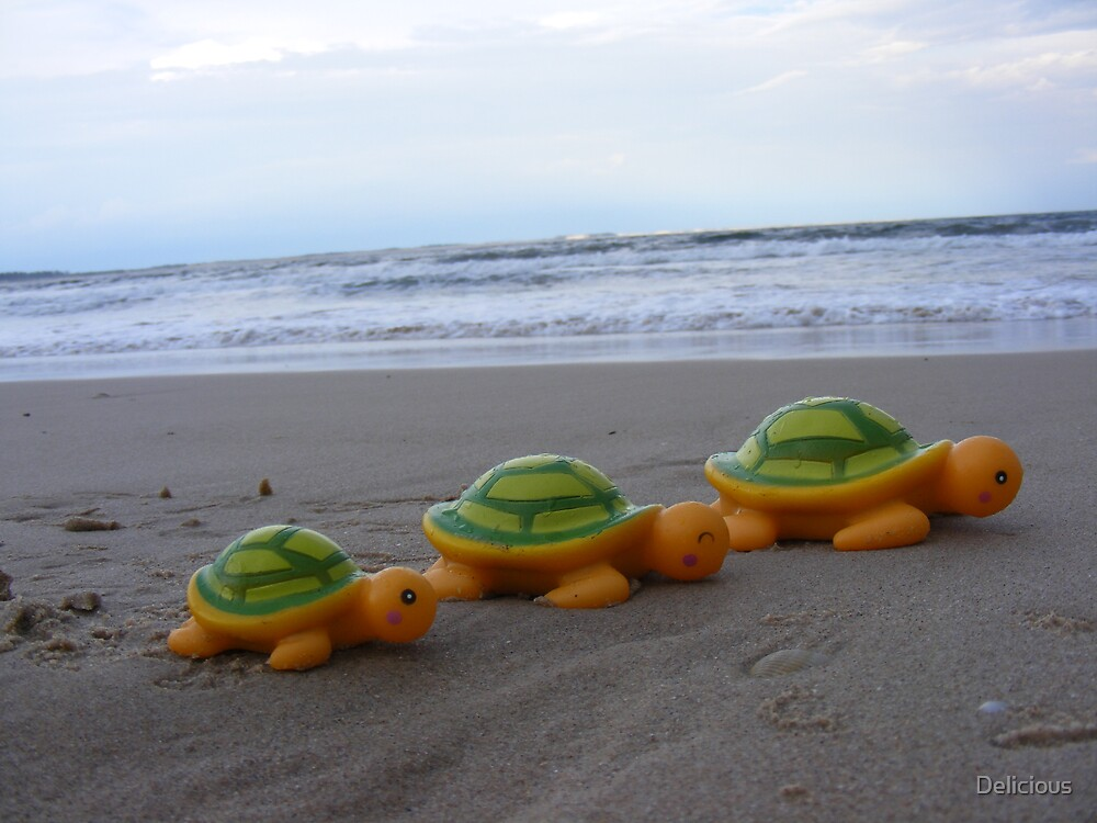 Carsons Turtles by Delicious