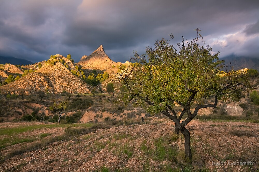 Fruit trees and mountain peaks by Ralph Goldsmith