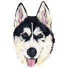 Kobe, Husky by Apatche Revealed