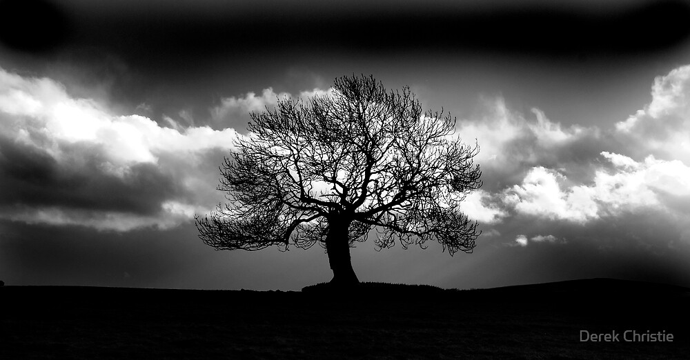 The Dark Tree by Derek Christie