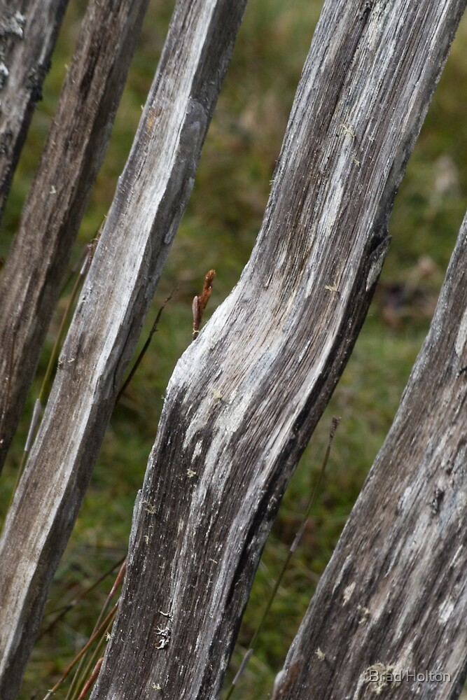 Mountain Fence by Brad Holton