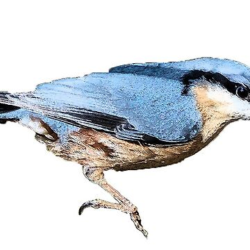 Nuthatch by Shirasaya