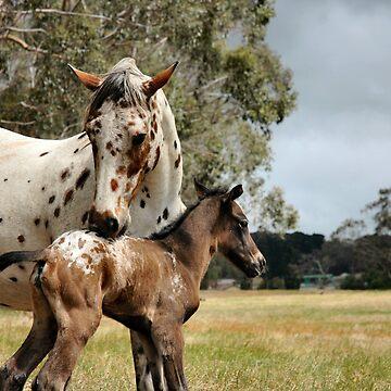 Appy foal by paintpony