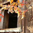 """Fall At An Abandoned  Ranch House"" by Lynn Bawden"