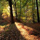 sun lit path by Jon Baxter