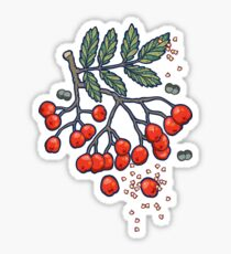 Magic rowan Sticker