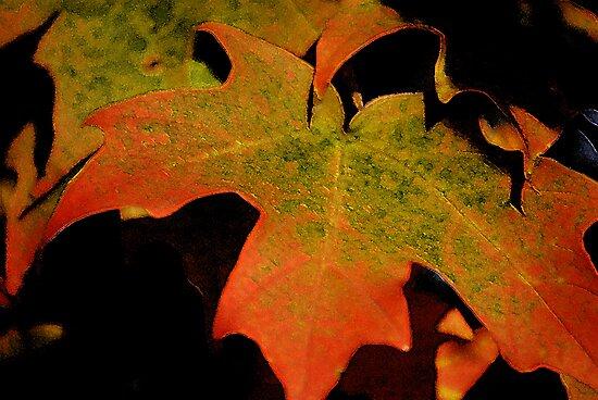 Autumn Glimmer by Victoria Jostes