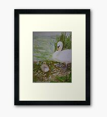 Swan and Cygnet Framed Print