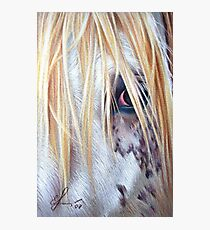 Appaloosa Photographic Print