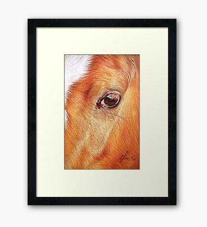 Chestnut Framed Print