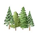 Christmas Winter Evergreen Pine Trees by Ann Drake