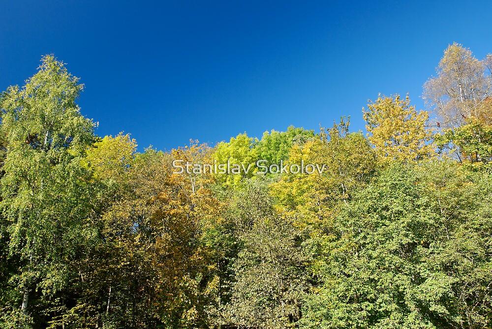 Trees and Sky  by Stanislav Sokolov