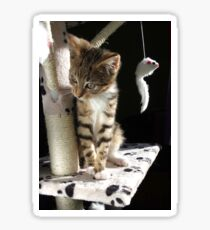 Kitten playing on cat tree Sticker