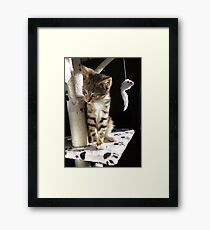 Kitten playing on cat tree Framed Print