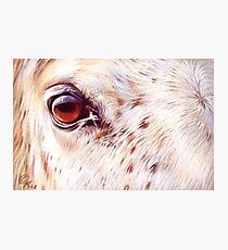 White horse close-up Photographic Print
