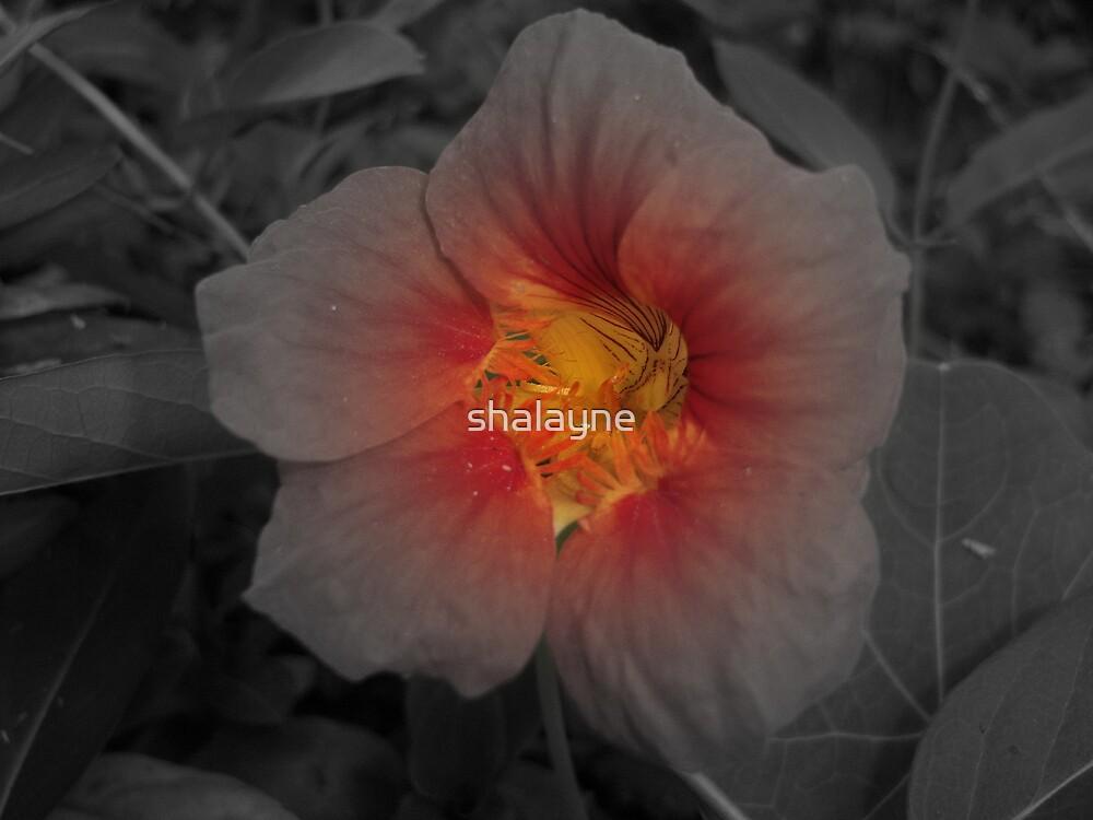 Suttle Beauty by shalayne