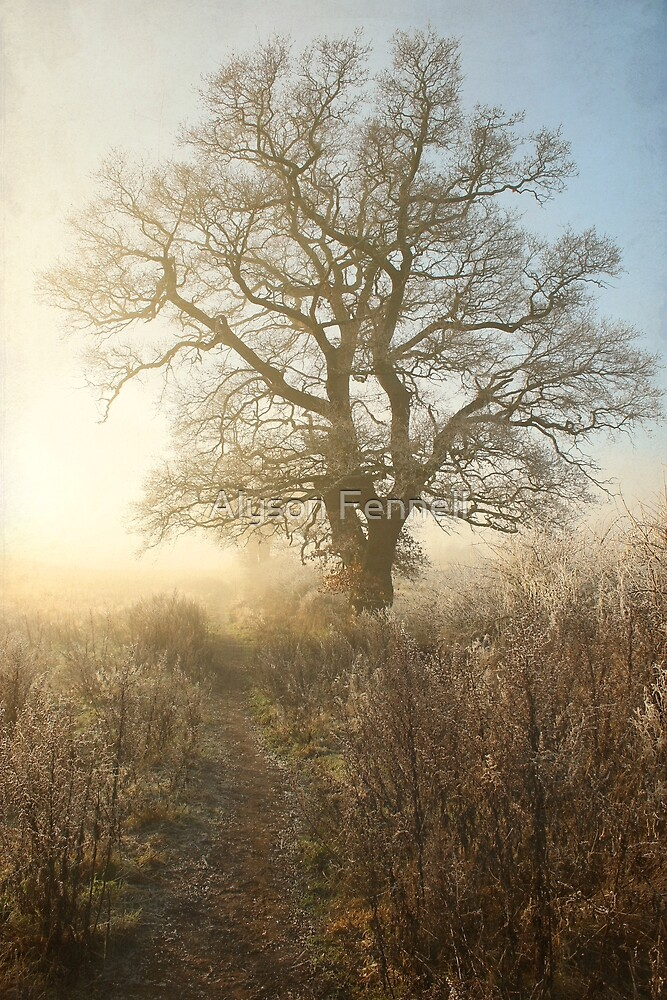 Winter Morning Tree by Alyson Fennell