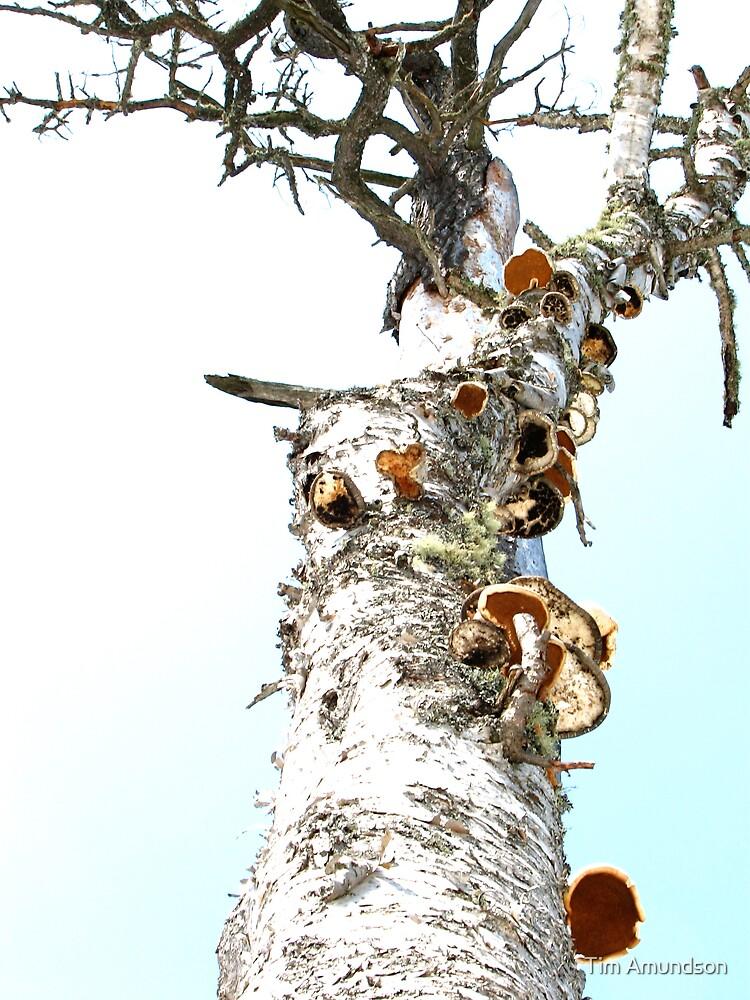 Mushroom Tree, Yummm! by Tim Amundson