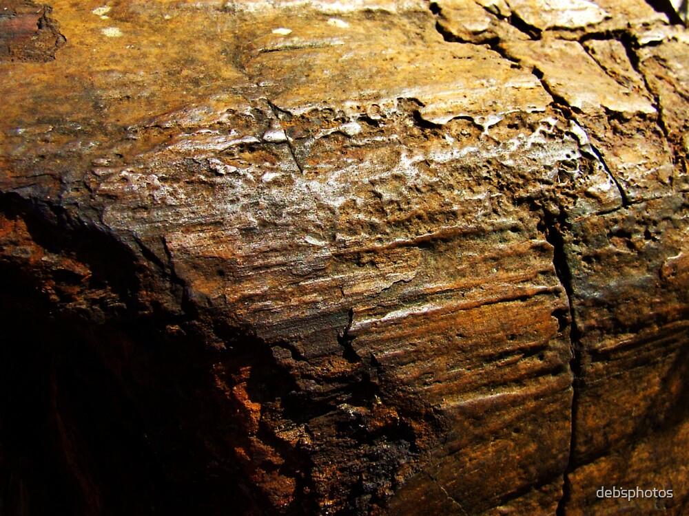"""Ancient Tree"" by debsphotos"