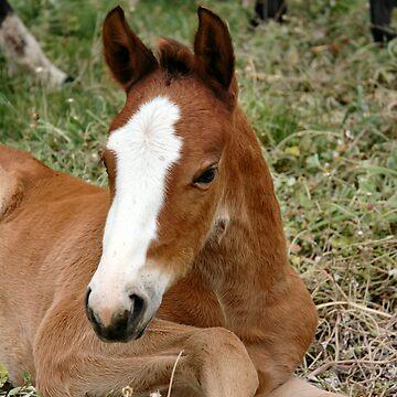 Glory's foal by paintpony