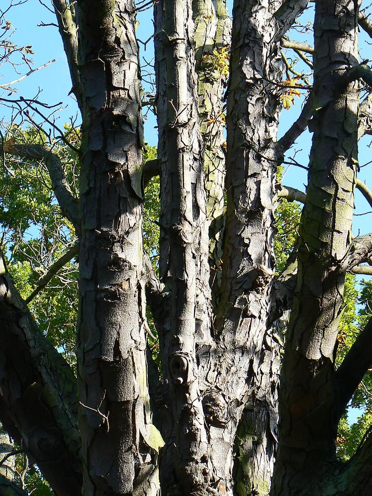 Autumn tree by Kernowangels