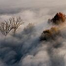Trees in the morning mist by pietrofoto