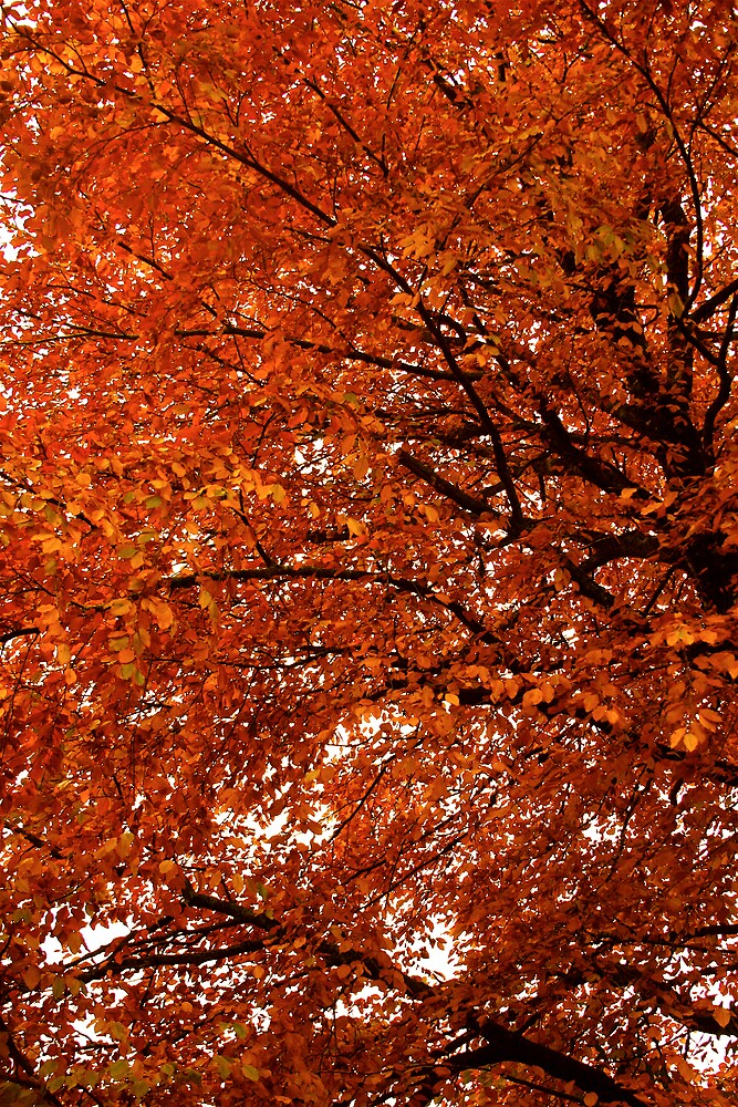 Red in late Autumn by Amanda Gazidis