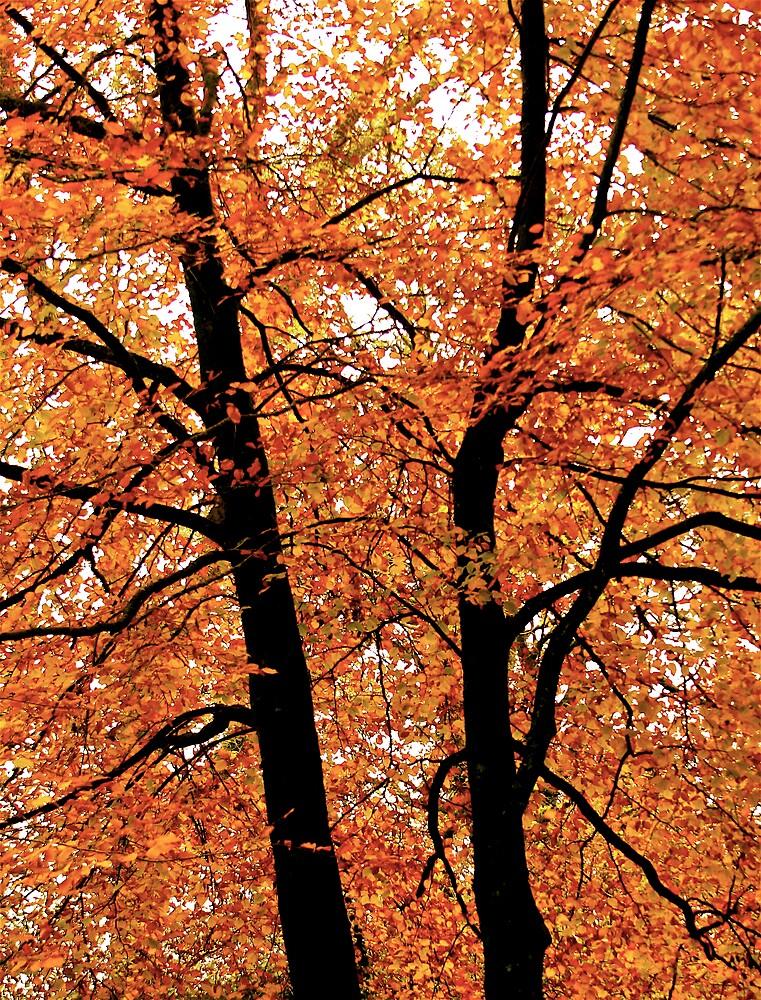 Vibrant trees,Dartmoor by Amanda Gazidis