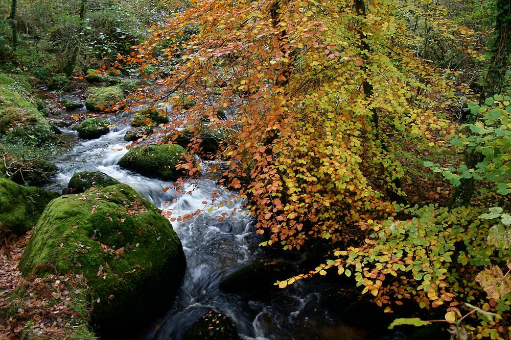 Autumn Beech and River Dart by Amanda Gazidis
