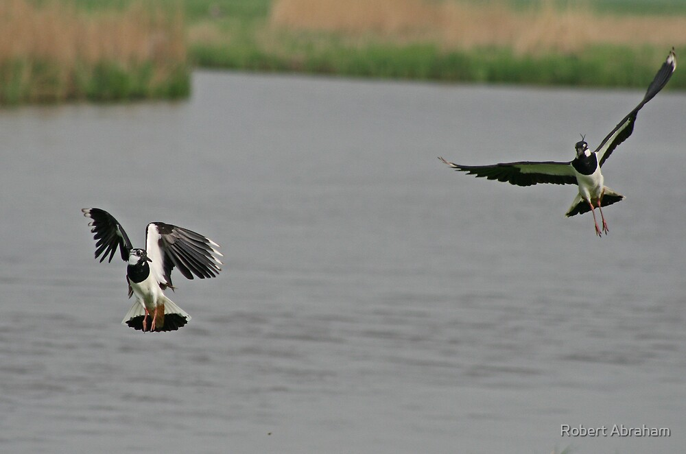 Dogfight by Robert Abraham