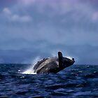 Humpback Whale Breaching Near Puerto Lopez, Ecuador VIII by Al Bourassa