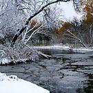 Winter Wonderland... by Larry Trupp
