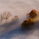 Trees in the mist by pietrofoto