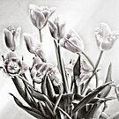 Tulips by Carla Jensen
