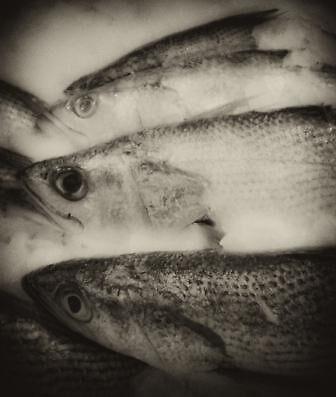 fisheye2 mono by Cadu Lemos