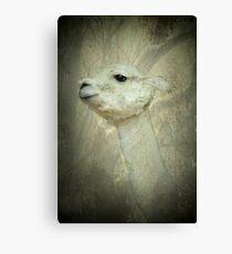 Lady Llama Canvas Print
