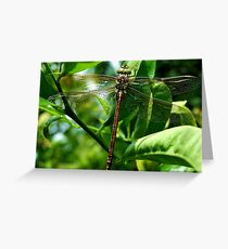 Lost in Vegetation!! Greeting Card