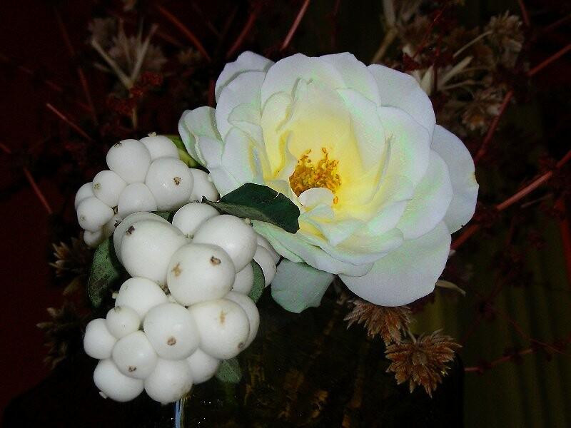 Rosa y Baya de nieve... by cieloverde