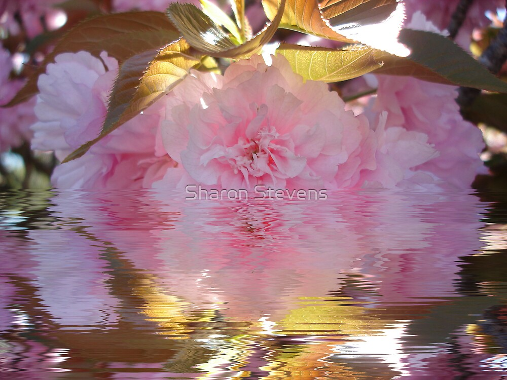 Pink Reflections by Sharon Stevens