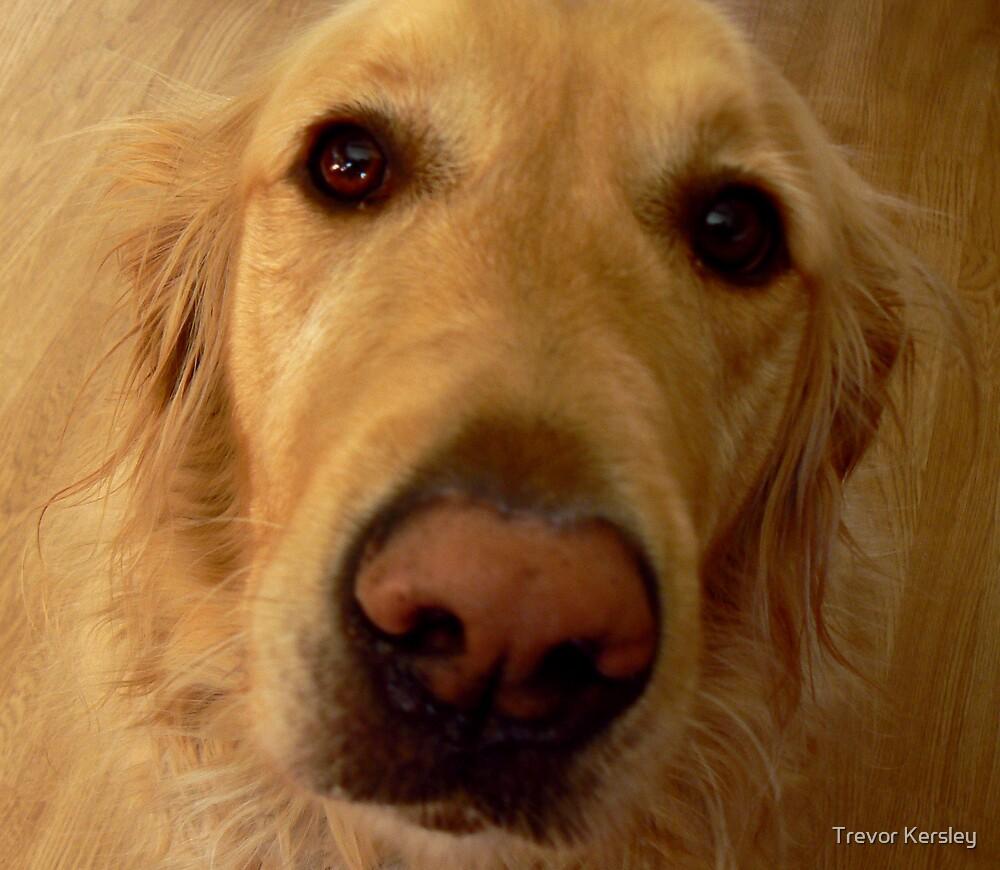 Sad Eyes by Trevor Kersley