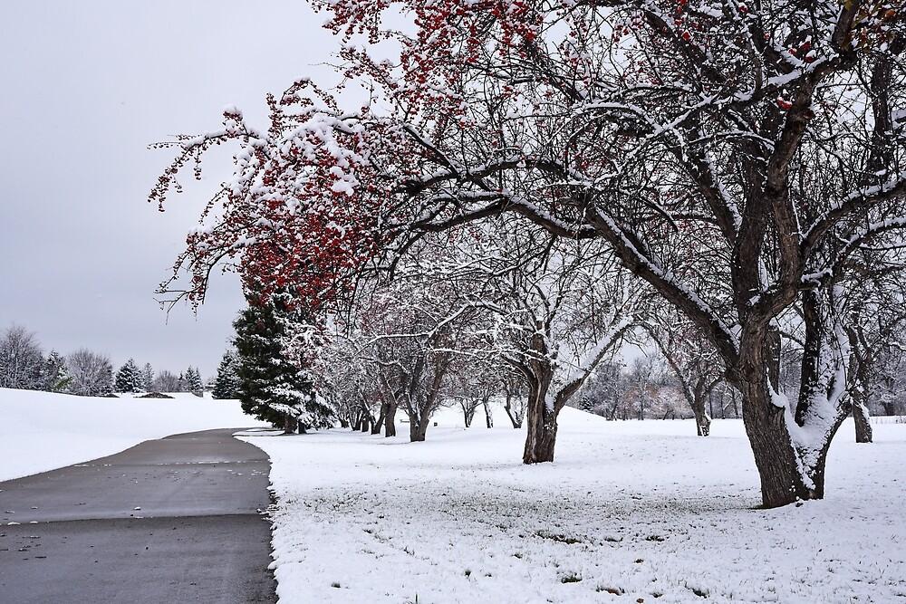 First Snow {5909} by pinkdream
