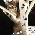 Kitten playing on cat tree by turniptowers