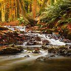 Drumleck River In Autumn by Derek Smyth